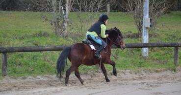 photo 1 Association pour la Promotion Equestre