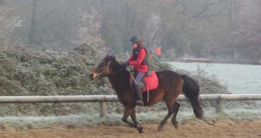 photo 2 Association pour la Promotion Equestre