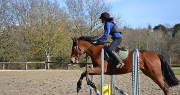 photo 6 Association pour la Promotion Equestre